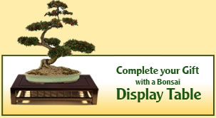 Bonsai Display Table